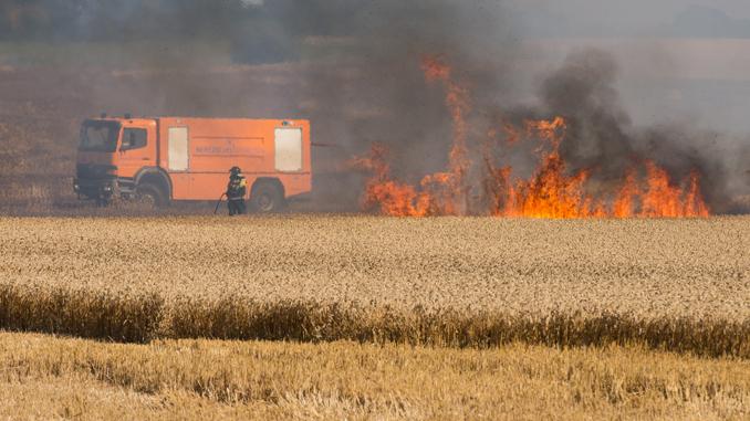 Opgaver – Naturbrand markbrand