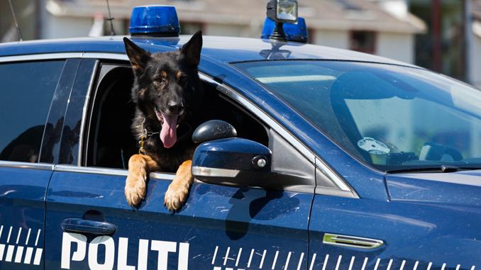 Politi – Hund