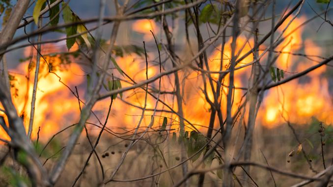 opgaver—naturbrand-13